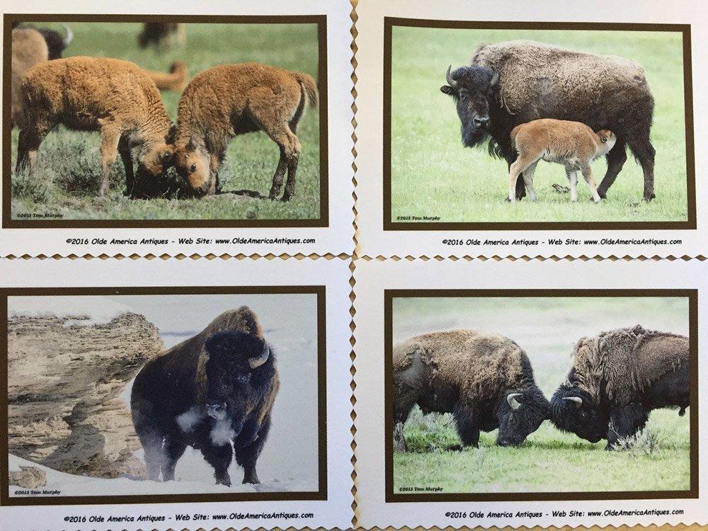 Bison quilt block set