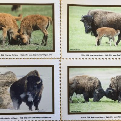Bison quilt block set