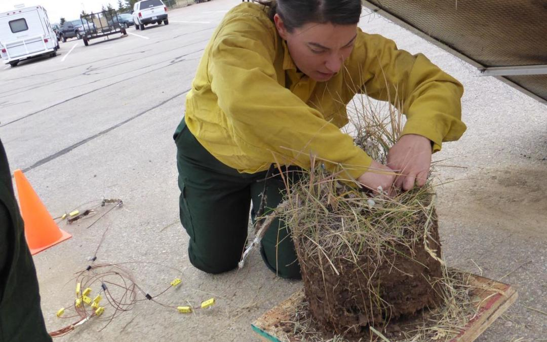 Forest Service project studies how regional grasslands respond to fires