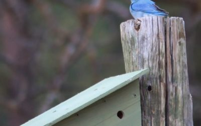 Black Hills Parks & Forests Association is hosting a bluebird box workshop on Saturday, October 24th