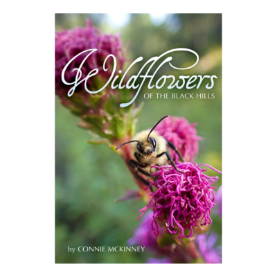 BH wildfowered cover